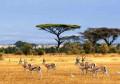 Spot Menarik Yang Ada Di Taman Nasional Baluran, Afrika Kecil Di Tanah Jawa!