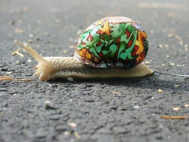 Seperti bola kecil nih kalau dilihat dari kejauhan. Jangan ditendang atau dilempar ya gaes. kasihan siputnya.