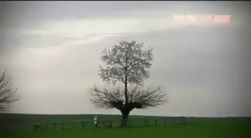 Pohon dua Spesies di Italia Di daerah Piomonte Italia terdapat pohon cery besar yang tumbuh bukan di atas tanah melainkan tumbuh di atas pohon. Biasanya pada kasus serupa salah satu pohon akan mati. Namun untuk pohon ini justru kedua duanya tetap hidup tumbuh dan berbuah.