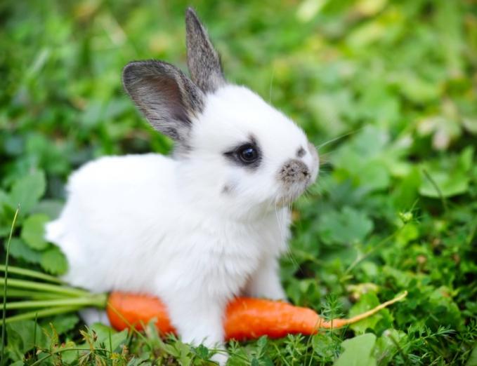 Bayi Kelinci