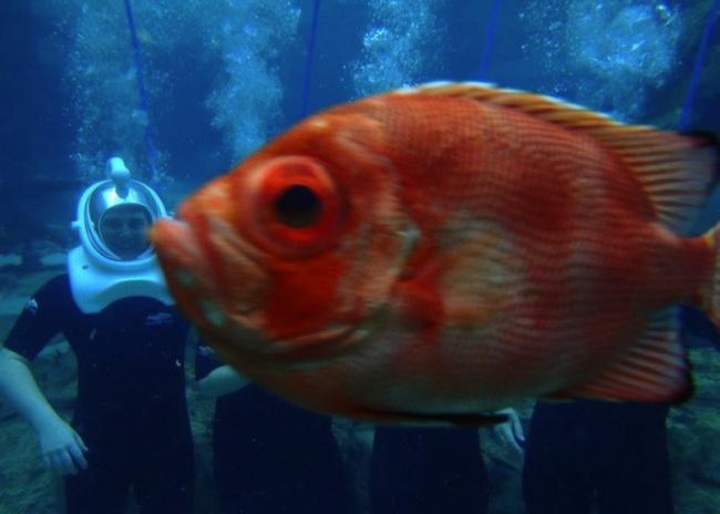 Udah capek-capek pose dalam air biar keren, si ikan malah main nyelonong aja tuh.