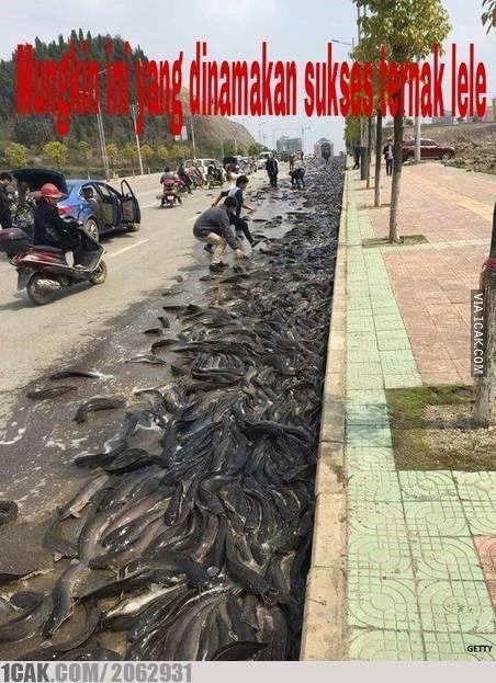 Mancing lele nggak harus di kali atau di kolam pemancingan. Di jalan raya pun bisa, jarang-jarang lho.