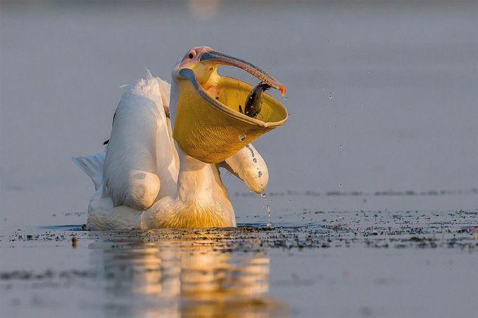 Foto ketika seekor burung melahap mangsanya juga dipotret oleh fotografer Rumania, Ionel Onofras.