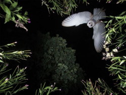 Kumpulan Foto Burung Menakjubkan yang Diambil Pada Waktu yang Tepat