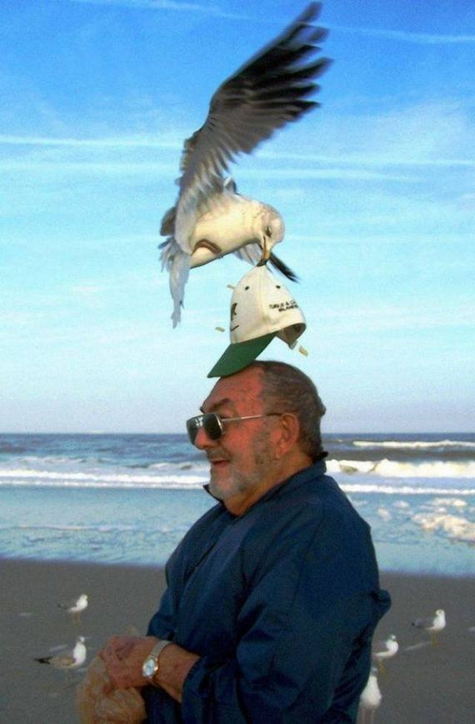 Burung itu seperti memasangkan topi pada laki - laki itu, padahal topinya malah diambil.