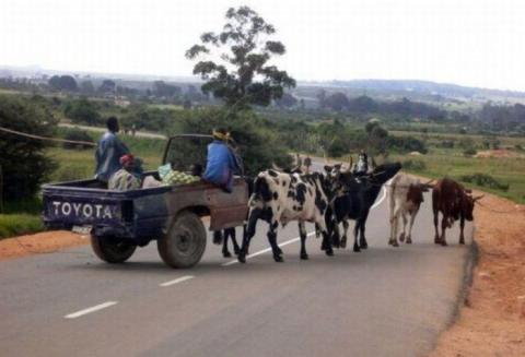 Susahnya naik kendaraan ini ketika para sapi susah diatur Pulsker. Jadinya bikin macet jalanan sih kadang.