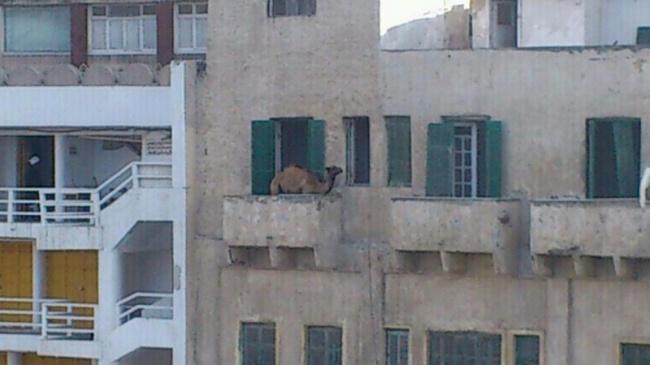 Untanya lagi suntuk nih di padang pasir, makanya dia pindah ke apartemen nyari suasana baru