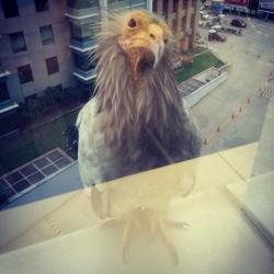 Burung-Burung Lucu yang Tertangkap Kamera Lagi Ngintip dari Balik Jendela