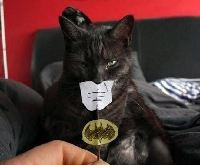 Wah, mirip banget ya sama sosok Batman?. Batman apa Batcat nih?.