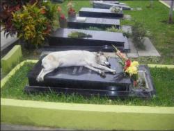 Penuh Kesedihan, Begini Ekspresi Hewan Saat Ditinggal Mati Pemiliknya