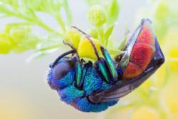 Mau Tau Penampakan Serangga Kalau Dilihat dari Dekat? Ini Foto-Fotonya