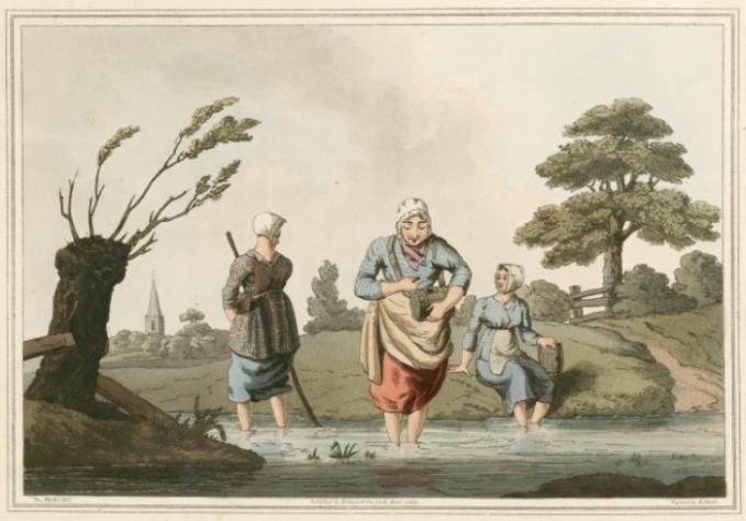 Di jaman dulu, pekerjaan sebagai pengumpul lintah adalah hal biasa Pulsker. Lintah dikumpulkan dari rawa-rawa untuk pengobatan bekam. Mereka ini tidak dibayar dengan baik walau mereka bertaruh nyawa kehilangan darah dan infeksi saat berburu lintah. Pada 1830-an penggunaan lintah sebagai pengobatan semakin berkurang.