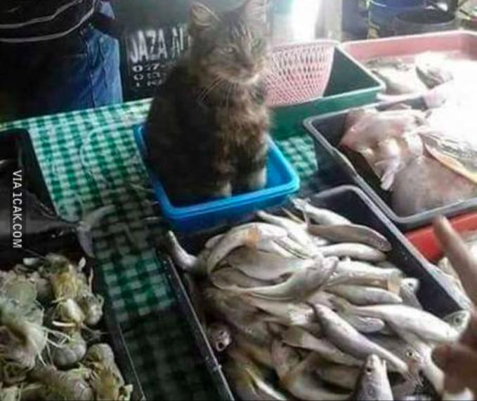 Baru kali ini kan melihat kucing jadi penjaga lapak ikan??