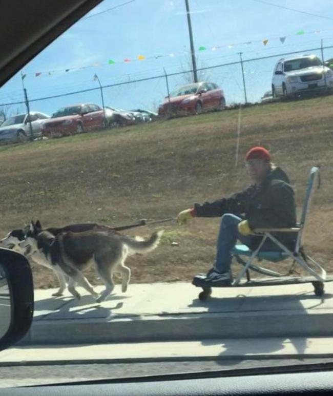 Idenya cemerlang banget gengs, pakai skateboard dan kursi dan ditarik dua ekor anjing peliharaan buat jalan-jalan. Nggak kasihan sama anjingnya?.