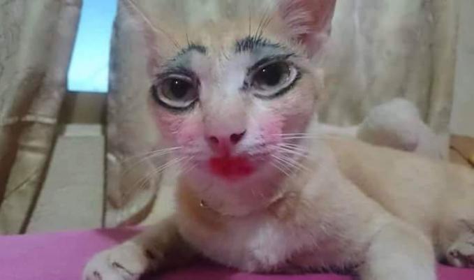 Kira-kira para kucing jantan pada tertarik nggak nih sama foto dengan pose menantang begini?.