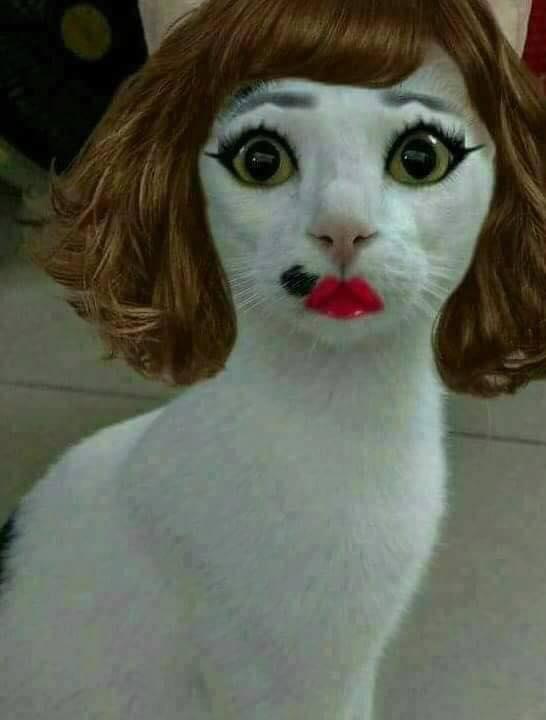 Wow, lain lagi sama kucing ini gengs. Dia penuh totalitas banget dalam urusan dandan.