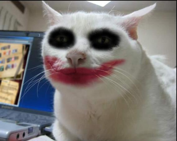 Hmm, ini hantu apa kucing ya dandannya menor amat?. Gemesin banget kan kucing-kucingnya setelah didandani?.