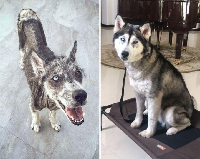 Hal yang sama juga dialami oleh anjing lucu ini Pulsker. Dia tak terawat dan kurus nampak kurus. Sekarang sih udah nggak lagi deh.