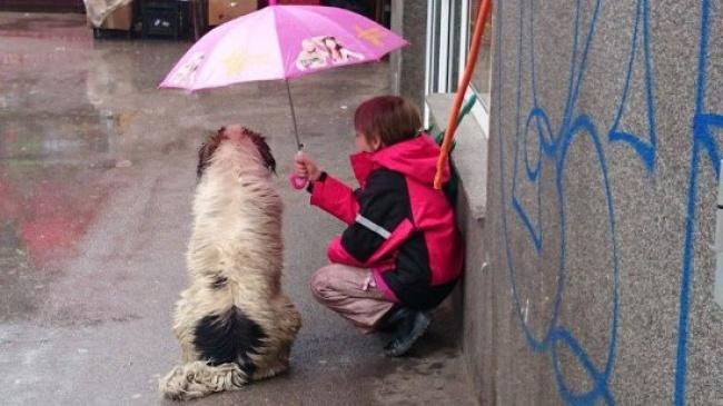 Kepedulian nggak hanya sesama manusia aja guys. Tapi juga sesama makhluk Tuhan. Seperti dicontohkan anak ini yang rela berbagi payung dengan anjing saat hujan.