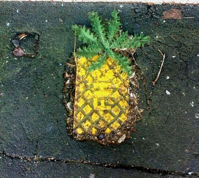 Dari kejauhan warna kuningnya nampak menggoda banget kayak buah nanas, ternyata pas dideketin hanyalah besi penutup lubang.