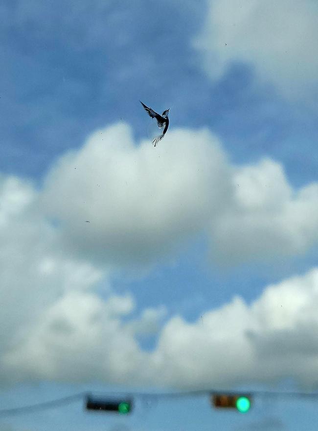 Jika kalian berpikir ini foto burung yang tebang di langit biru, buang jauh-jauh pikiran itu Pulsker. Karena apa yang kalian liat ini hanyalah secuil pecahan kaca jendela mobil. Wah, mirip banget ya benda-benda tersebut dengan hal lainnya.