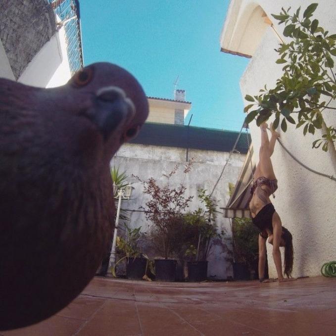 Lagi asik selfie, malah ada yang ganggu di belakang, ujar sang burung.