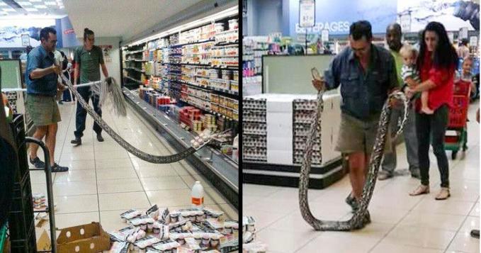 Waduh, kalau menemukan ular sebesar ini pas belanja di supermarket, apa yang kamu lakukan?