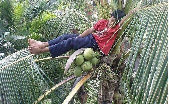Kalau yang lainnya santai di bawah pohon, nih bocah malah ketiduran di atas pohon kelapa.