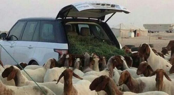 Lebih berharga domba domba dari pada mobil