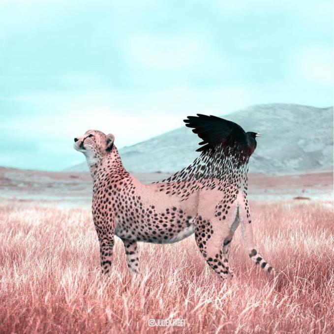 Cheetahnya perlahan berubah menjadi seekor burung gagak guys.