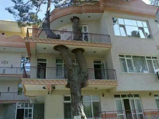 Rumah dan pohon seakan menyatu menjadi komponen yang saling melengkapi.