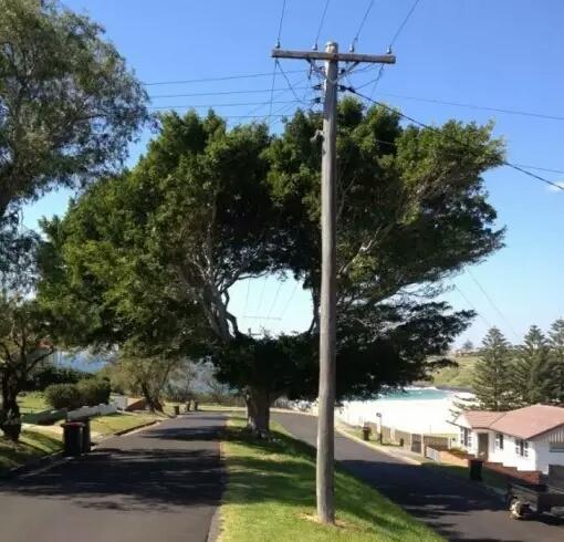 Nah yang satu ini pohon dibuat tidak mengganggu aliran listrik tetapi juga tidak menghilangkan kesejukan lingkungan sekitar