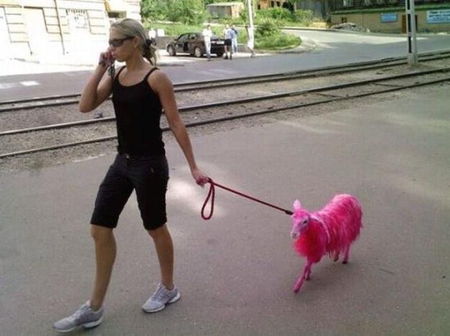 Waduh, kambingnya kok berubah jadi pink gini ya?.