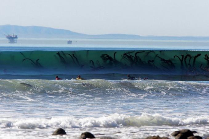 Ini bukan serangan monster ya, melainkan rumput laut raksasa yang terbawa ombak.