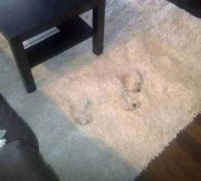 Apakah kamu melihat Puppies kecil pada gambar di bawah ini?