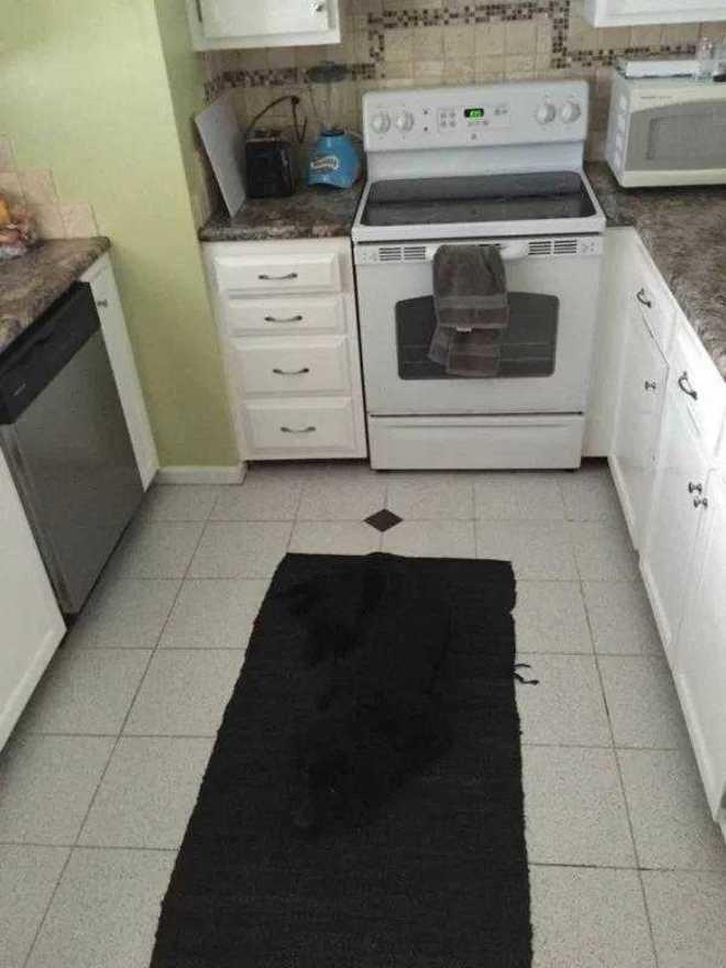 Apakah kamu melihat anjing berwarna hitam pada karpet di bawah ini?