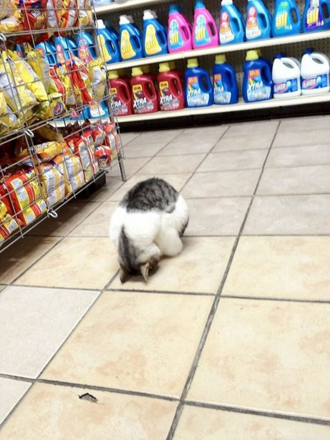 Saking ngantuknya nggak sadar nih si kucing kalau sebenarnya dia tidur di dalam toko.