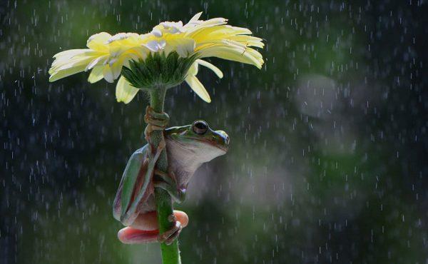Nggak ada payung pakai bunga pun jadi nih Pulsker.