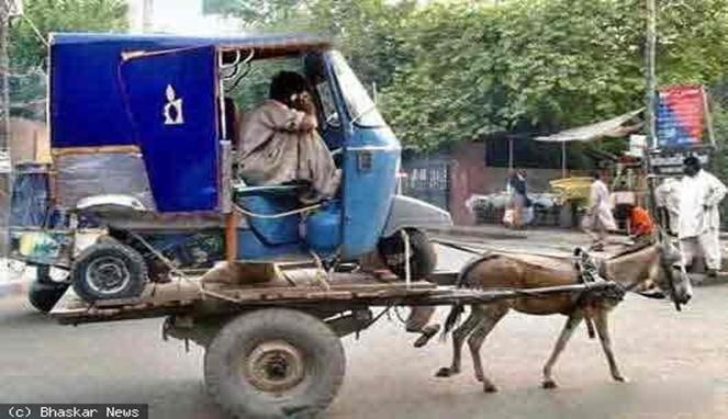 Kalau tadi gerobak keledai mengangkut mobil, kali ini giliran bemonya yang diangkut.