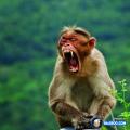 Kelucuan Primata Kalau Lagi di Alam Liar