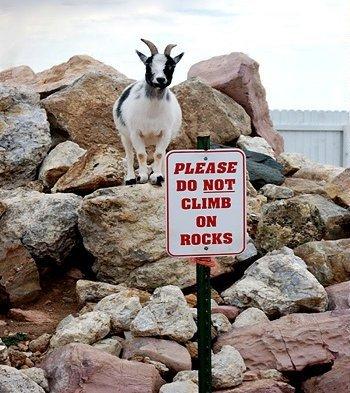 Untung aja nggak dijadiin sate kambingnya gara-gara melanggar aturan. Hmm, ternyata nggak hanya kita aja ya yang kerap melanggar aturan bahkan hewan-hewan sekitar kita juga pernah melakukannya lho. (Sumber : Bored Panda via Selipan.com)