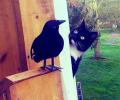 Aksi Kucing Diluar Dugaan yang Super Menggemaskan
