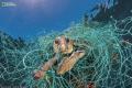 Foto National Geographic tentang Pencemaran Habitat Hewan Ini Bikin Kamu Trenyuh