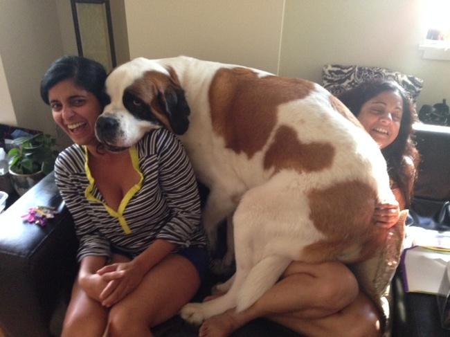 Kasihan tuh si mbaknya sepertinya kesakitan nahan berat anjingnya.