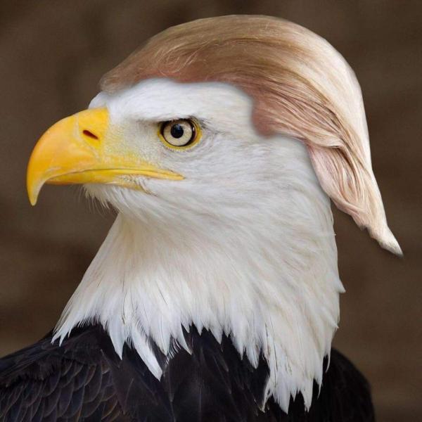 Kira-kira keren nggak kalau burung elang maskot Amerika punya rambut seperti sang presiden?