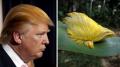 Gokil, Hewan-Hewan Ini Punya Bulu Mirip Gaya Rambut Donald Trump